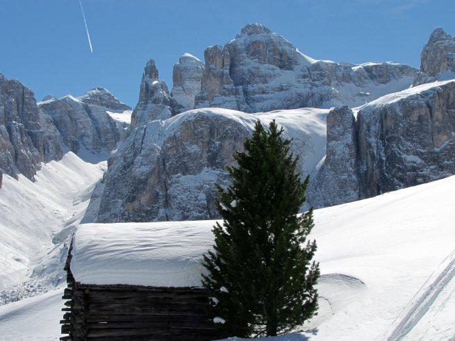 Zieleń drzew kontrastuje z bielą śniegu