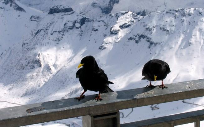 karmimy ptaszyska, foto by WG